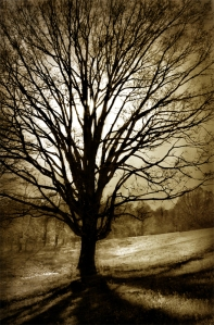 The_Tree_of_Life_by_Demonflame